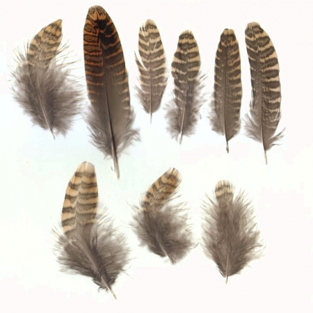 feather-scolopax