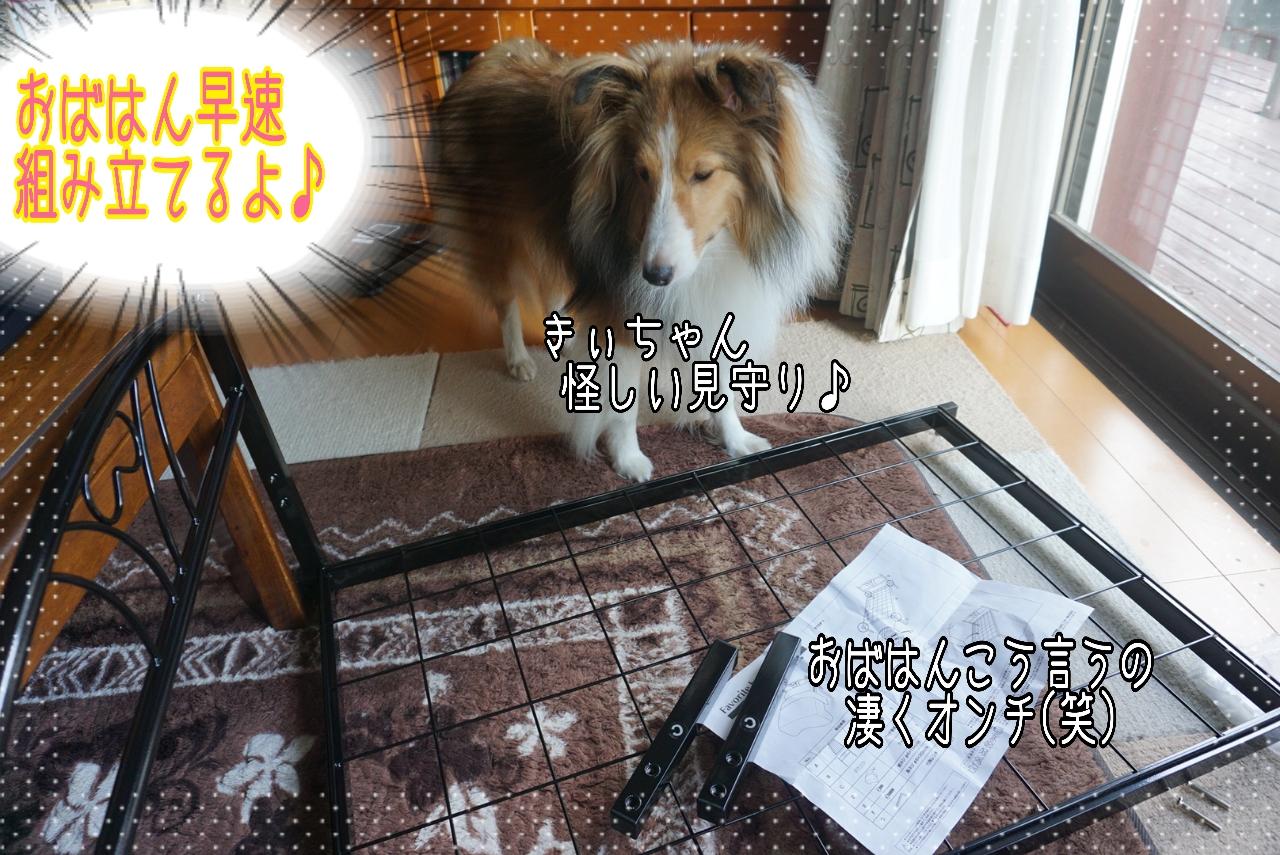 2014-09-25-20-01-18_deco.jpg