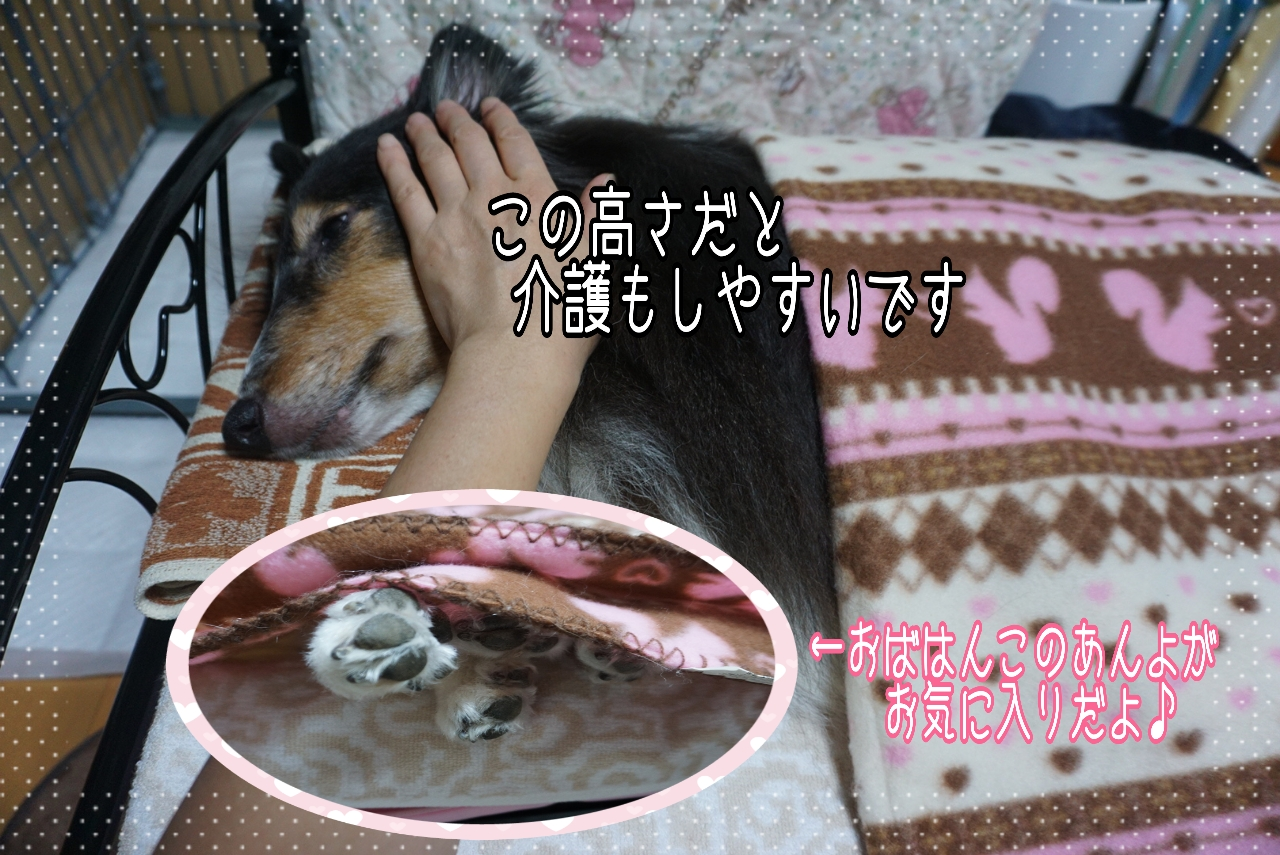 2014-09-25-20-33-04_deco.jpg