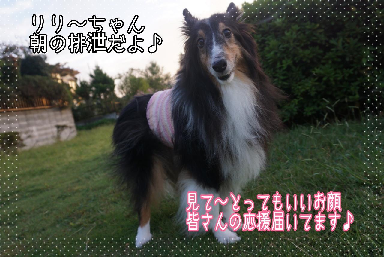 2014-10-03-06-59-27_deco.jpg