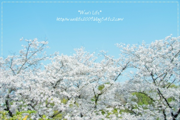 IMG_5412-20120412.jpg