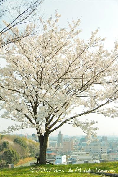 IMG_5436-20120412.jpg