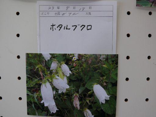P1220921.jpg