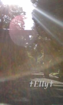 風に吹かれて、風になりたい-明治神宮大鳥居