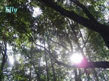 $風に吹かれて、風になりたい ~六甲山麓里山便り~-木漏れ日02