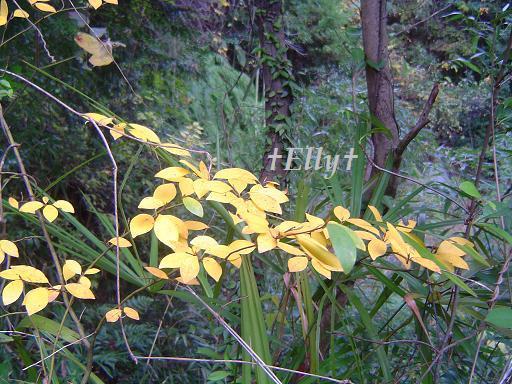 六甲山麓 里山便り~里山で自由な暮らし方~-ちいさい秋・黄色