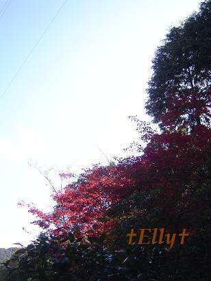 六甲山麓 里山便り ~ トカイナカな里山で音楽と猫と犬とのスローライフ ~-紅葉015