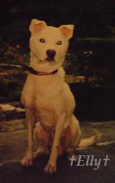$六甲山麓 里山便り ~ トカイナカ な里山で音楽と猫と犬とのスローライフ ~-伊織08