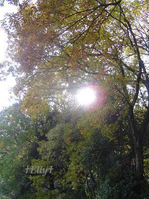 六甲山麓 里山便り ~ トカイナカ な里山で音楽と猫と犬とのスローライフ ~-初冬の紅葉04