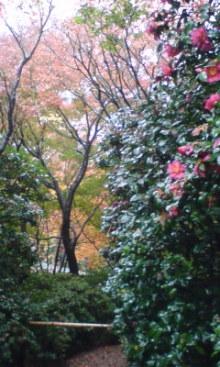 六甲山麓 里山便り ~ トカイナカ な里山で音楽と猫と犬とのスローライフ ~-091203_1318~01.jpg