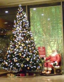 六甲山麓 里山便り ~ トカイナカ な里山で音楽と猫と犬とのスローライフ ~-クリスマスツリー09-2
