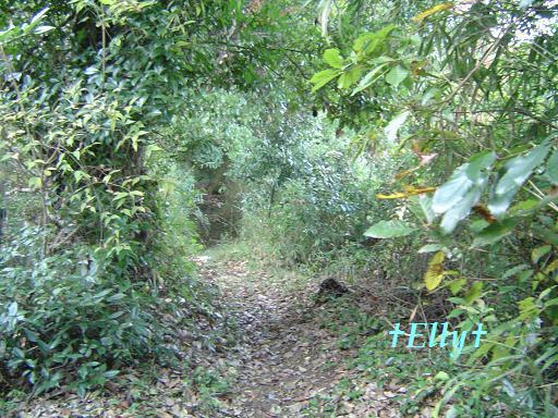 $六甲山麓 里山便り ~ トカイナカ な里山で音楽と猫と犬とのスローライフ ~-小道01