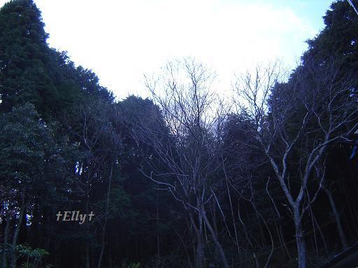 六甲山麓 里山便り ~ トカイナカな里山で音楽と猫と犬とのスローライフ ~-冬の木々01