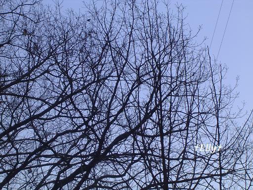 六甲山麓 里山便り ~ トカイナカな里山で音楽と猫と犬とのスローライフ ~-冬の木々02