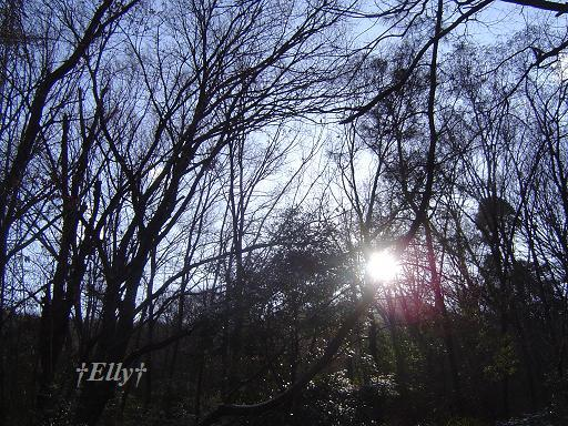 六甲山麓 里山便り ~ トカイナカな里山で音楽と猫と犬とのスローライフ ~