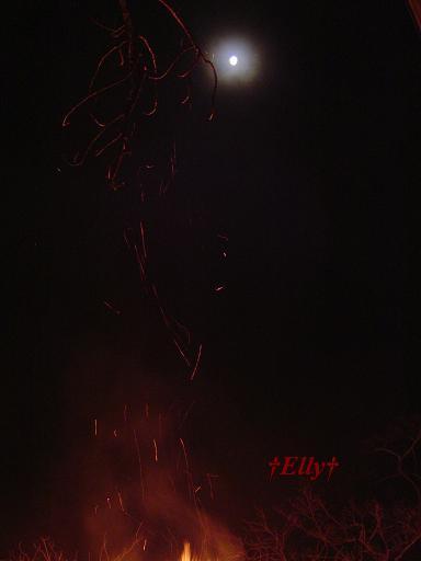 六甲山麓 里山便り ~ トカイナカな里山で音楽と猫と犬とのスローライフ ~-初寅大祭の月02