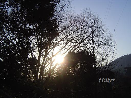 $六甲山麓 里山便り ~ トカイナカな里山で音楽と猫と犬とのスローライフ ~-朝01