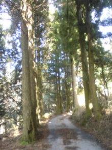 六甲山麓 里山便り~里山流ロハスでスローな田舎暮らし~-100428_1531~01.jpg