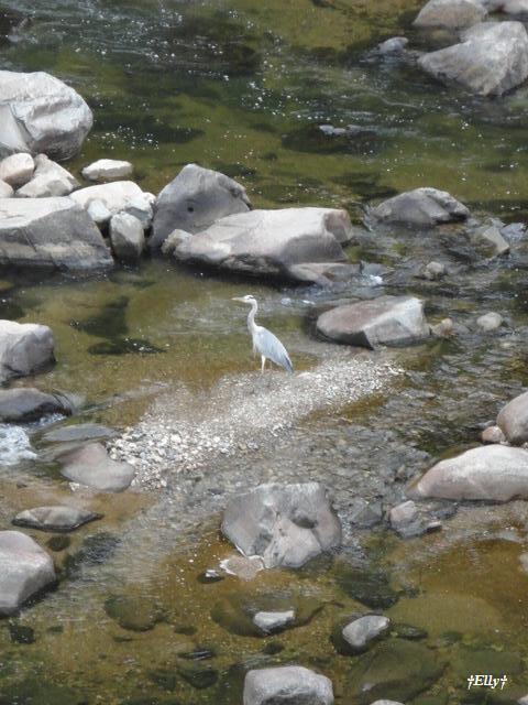 六甲山麓里山写真館~田舎スローライフの風景~