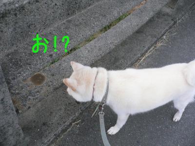 2_20111021120856.jpg