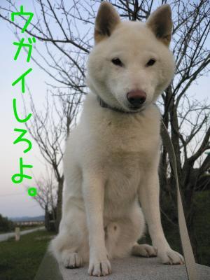 4_20111021120854.jpg