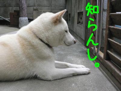 5_20110930212918.jpg