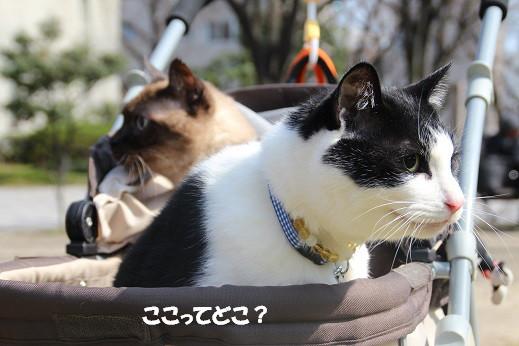 猫の日 2014-2-22-1
