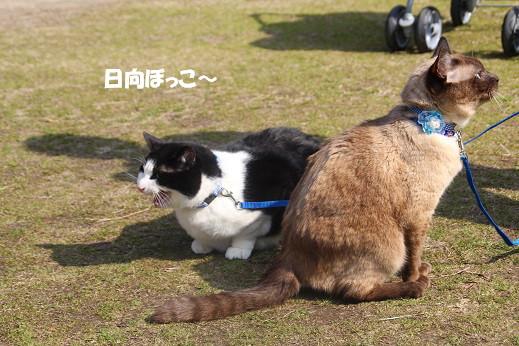 猫の日 2014-2-22-4