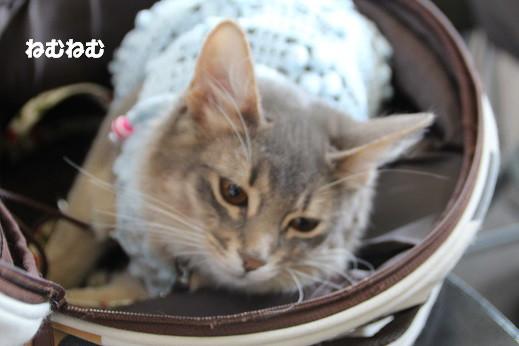 猫の日 2014-2-22-7