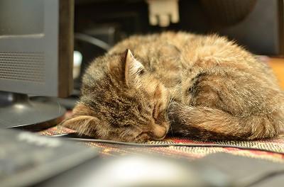 066パソコンの台の上で気持ち良さそうに寝ているのを発見!可愛くて何枚も写真を撮ってしまいました!65