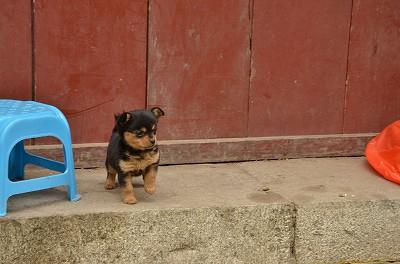 025途中で見つけた子犬。なぜか片足を上げてこっちを見ていた。