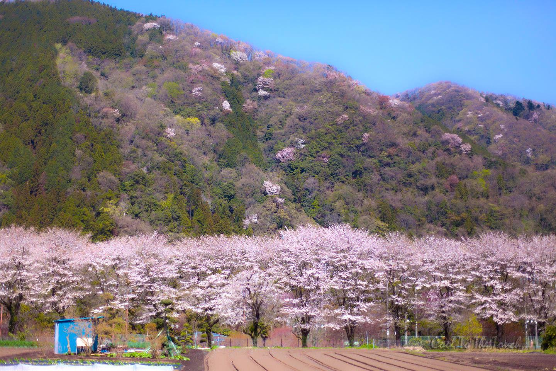 kanasaku401.jpg