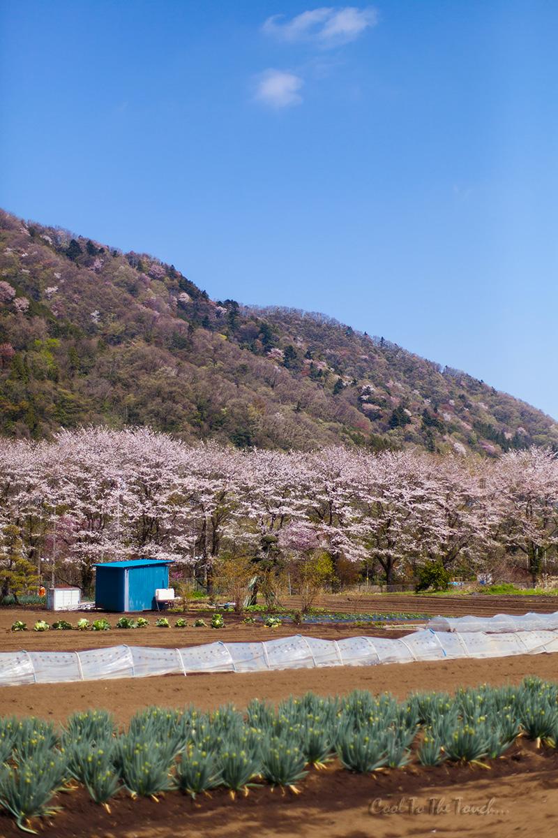 kanasaku402.jpg