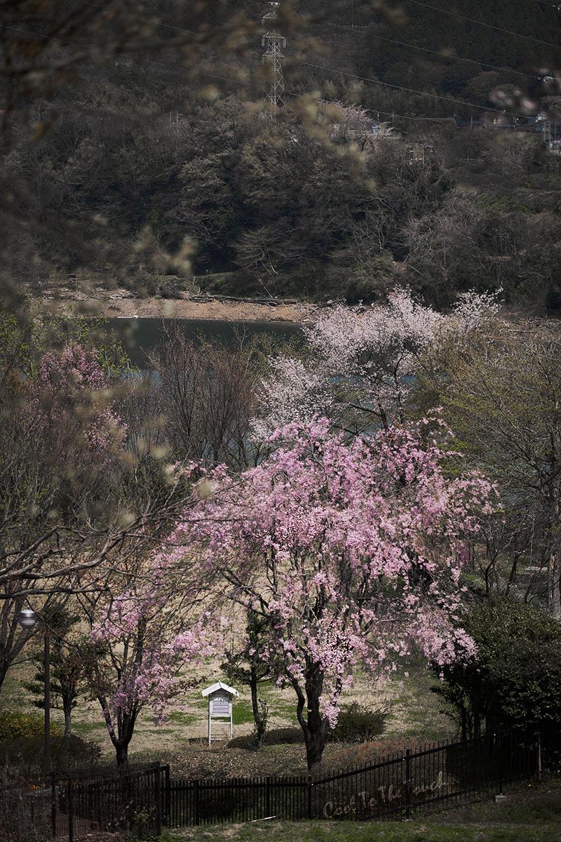 kanasaku404.jpg