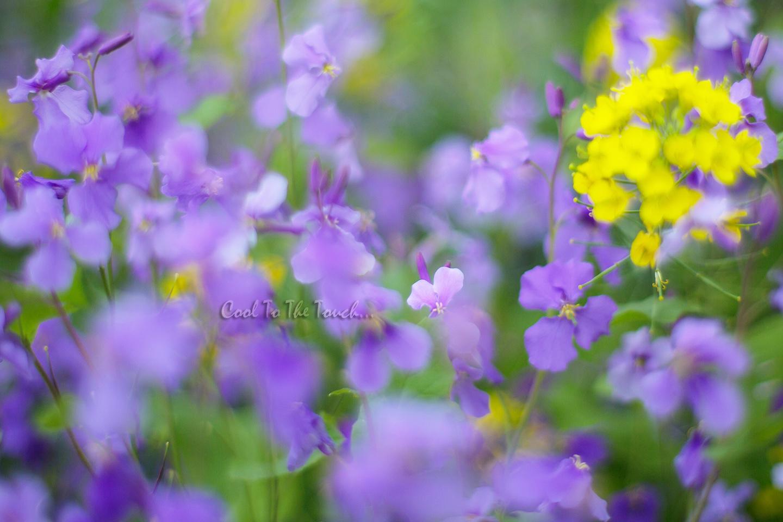 murasakihana401.jpg