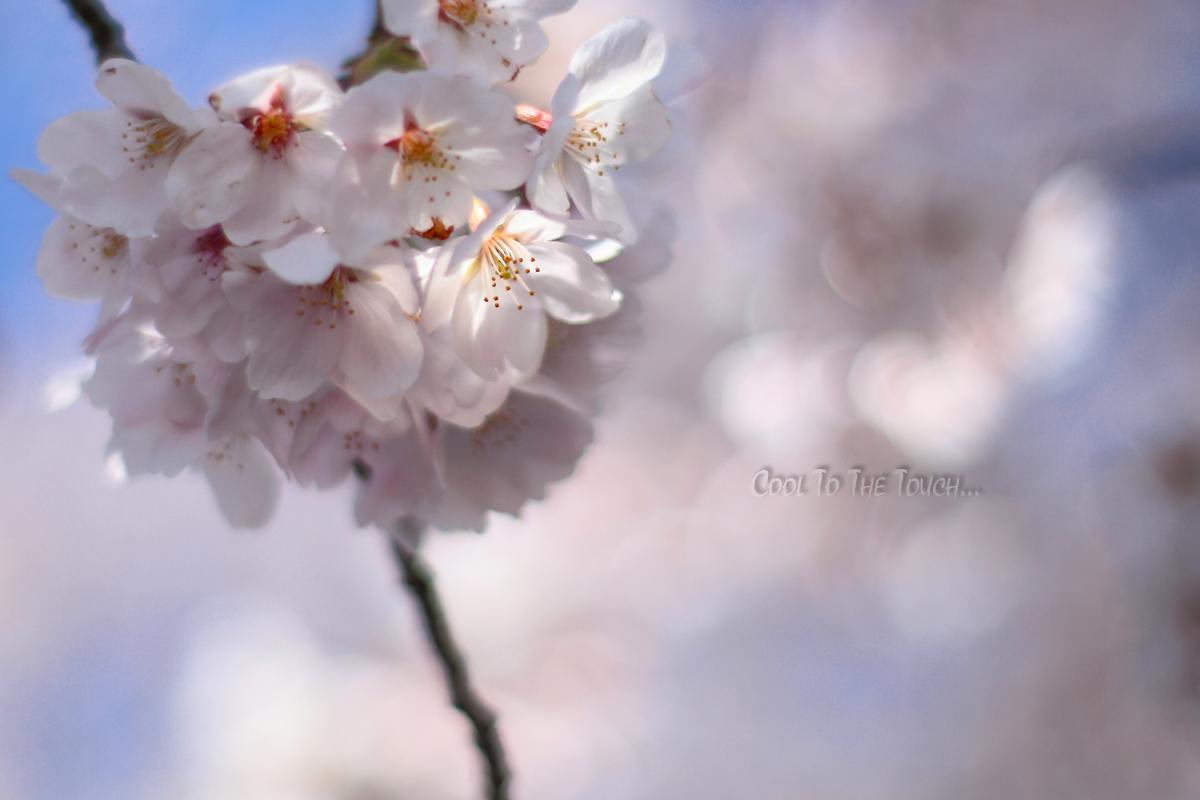 sakuramacro004.jpg