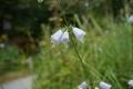 9-10 湿生花園