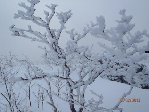 比婆山(毛無山~出雲峠) 013