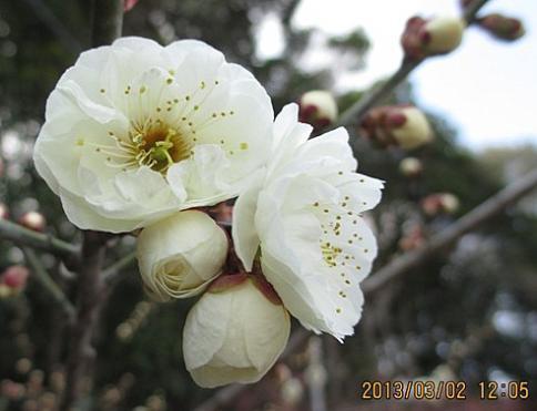 綾部山梅林 M 014-001