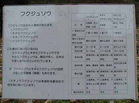 総領・ユキワリイチゲ他 041-001