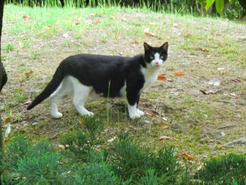 栗林公園ネコ