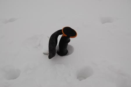 12小屋付近の積雪