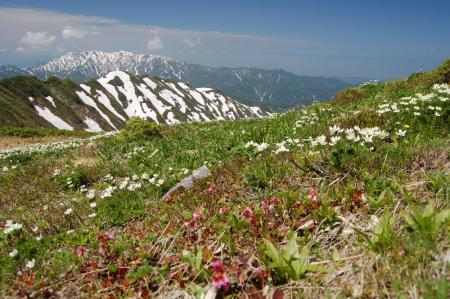 76エブリ差岳へ・お花畑