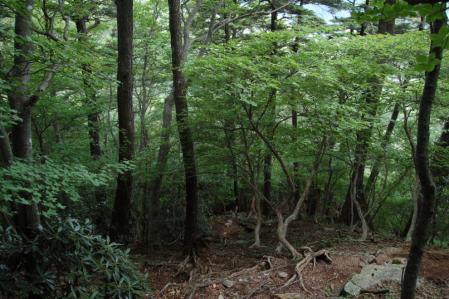 35黒檜岳・下山路