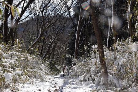 28ハイキングコース