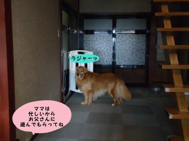004_20120408074119.jpg