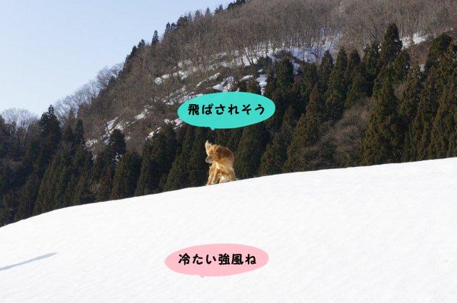 005_20120320180347.jpg