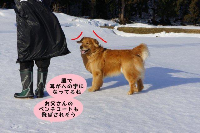 008_20120320180356.jpg
