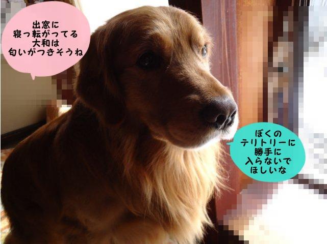 008_20120330145044.jpg