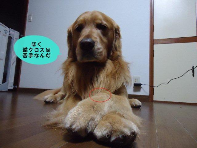 008_20120405201807.jpg